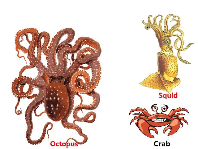 Aquatic animals,aquatic habitat, ocean habitat, The living organisms and their surroundings, NCERT class 6, chapter 9, NCERT class 6th Science Solutions,