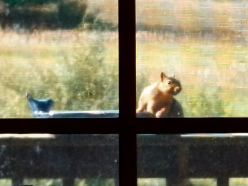 squirrel leaning on birdbath