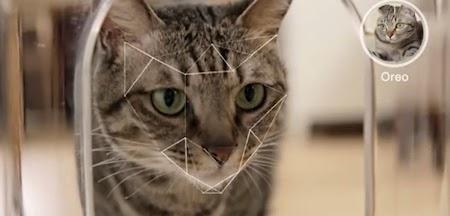 Smart Cat Feeder Wet Food