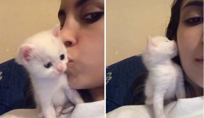 Video Viral Anak Kucing Lucu Dan Imut Cium Balik Majikan Yang Cantik Ikutrame Com