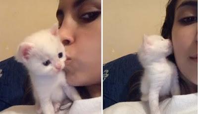 Gambar kucing ucu cium majikannya yang cantik