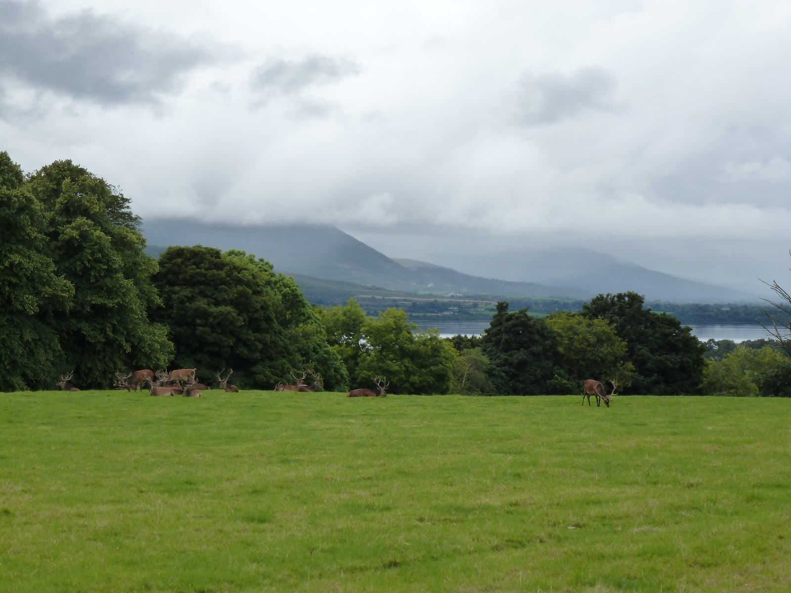 Weide met herten, Killarney National Park