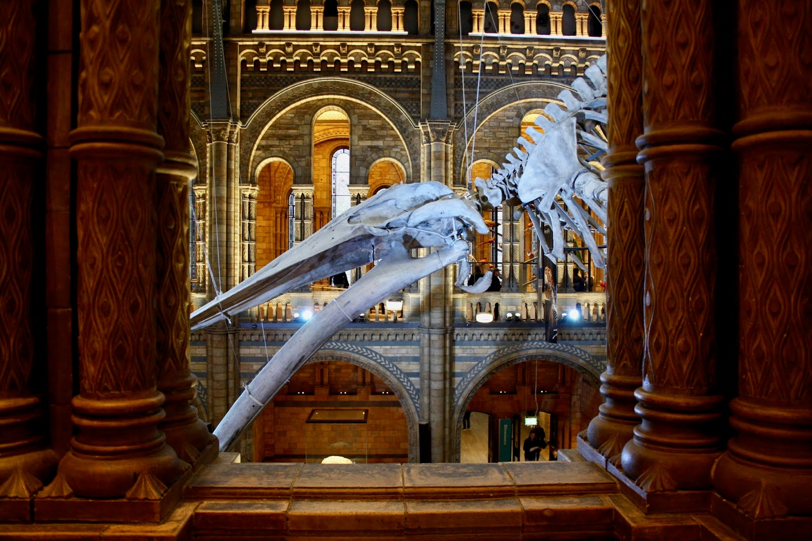 Hope blue whale Natural History Museum Kensington London