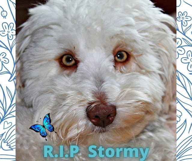 A Tribute to R.I.P. Stormy a.k.a. The Bossman