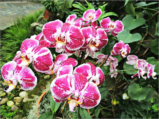 Orquídeas en Jardín Botánico de Montreal