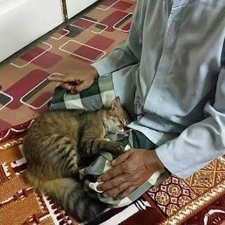 Foto kucing ganggu orang sholat