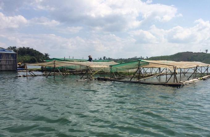 Nhiều cư dân xóm lòng hồ đã thích ứng rất nhanh, vừa nuôi cá lồng bè vừa làm dịch vụ du lịch.