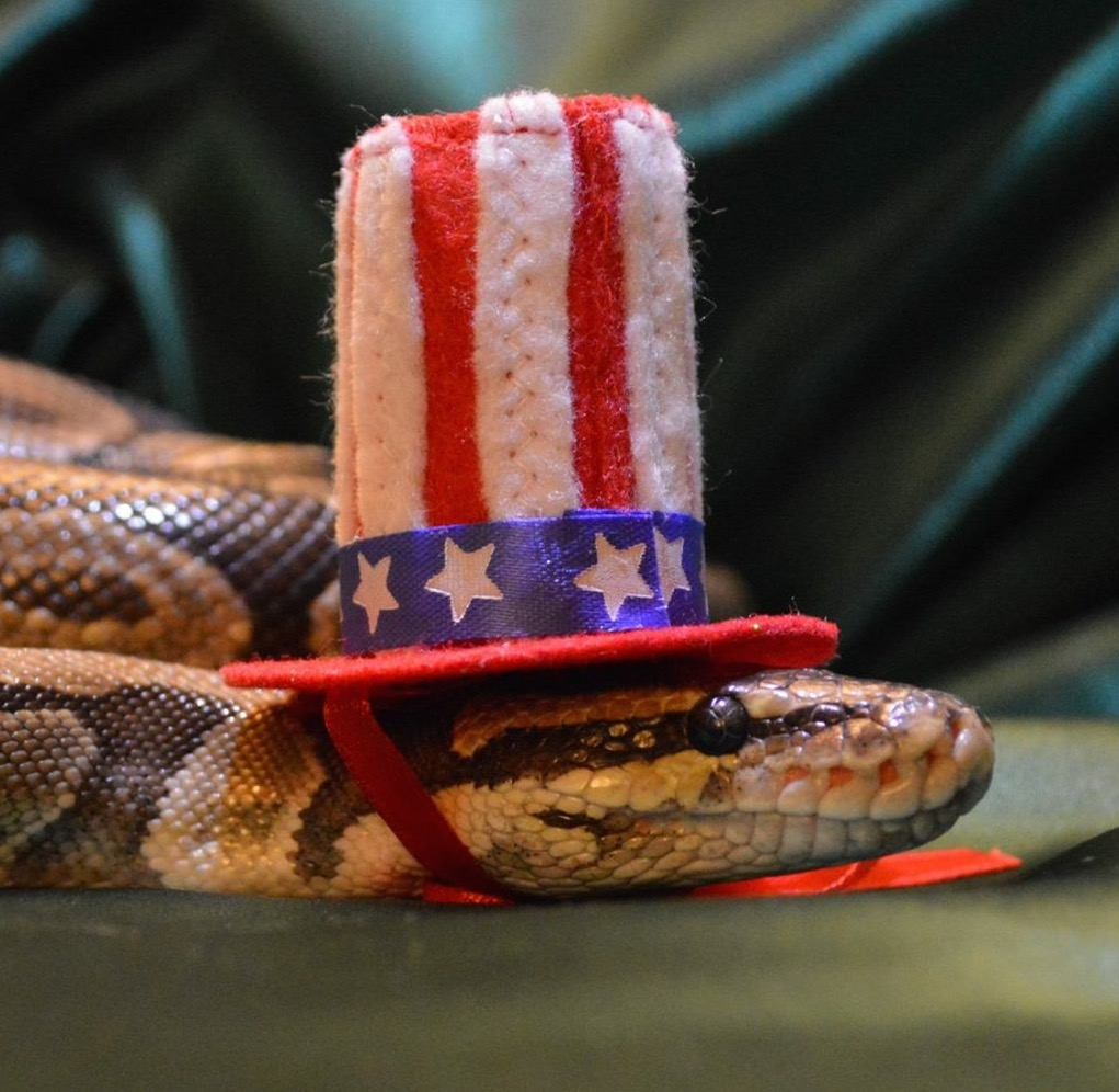 Sarah Bearded Dragon Rescue Hats Snakes