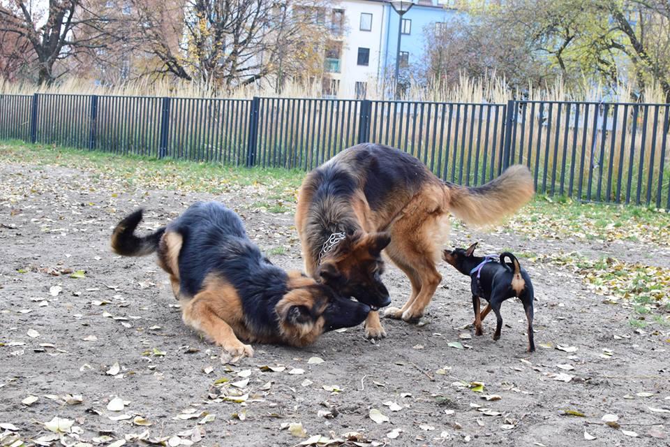 Duży pies i mały pies to nie zawsze wybuchowa mieszanka