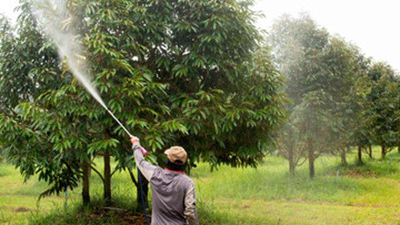 Pupuk Herbafarm Untuk Tanaman Durian