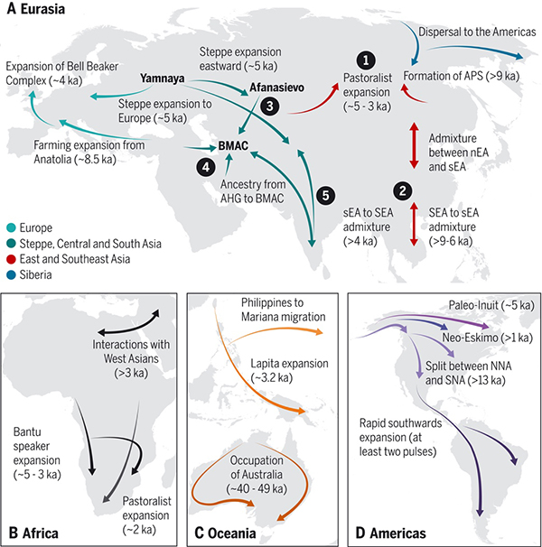 Decoding human history with ancient DNA