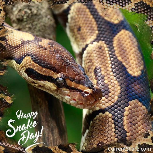 World Snake Day