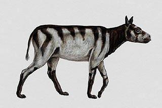 los mamiferos Litopterna en argentina Rhynchippus