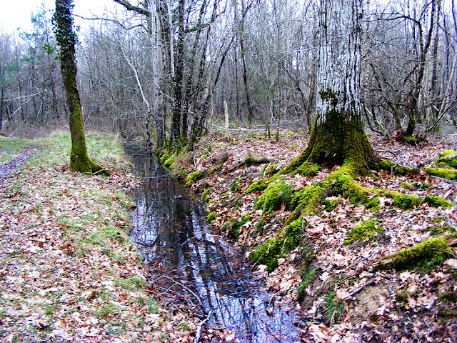 Mossy roots and a drainage ditch in the forest.  Indre et Loire, France. Photographed by Susan Walter. Tour the Loire Valley with a classic car and a private guide.
