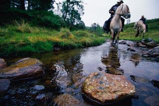 Savalen horse center