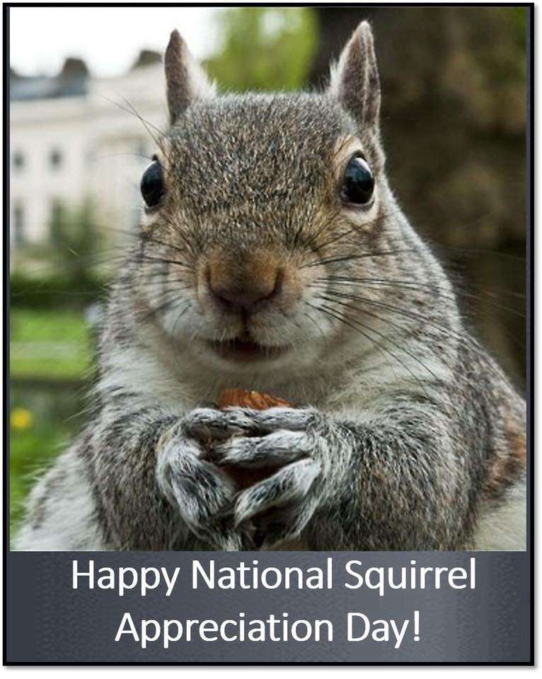 National Squirrel Appreciation Day Wishes for Whatsapp