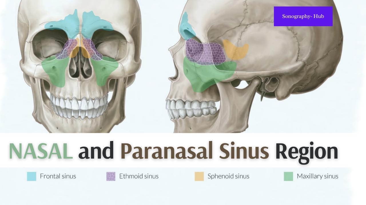 The Nasal And Paranasal Sinus | CT Protocols