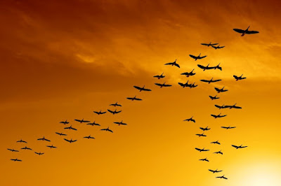 V formation of birds when flying as groups