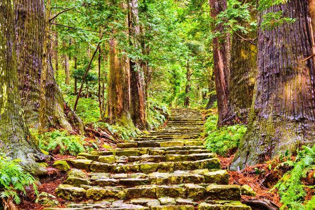 Densa floresta que recobre a área montanhosa da região de Kumano Sean Pavone/Shutterstock.com