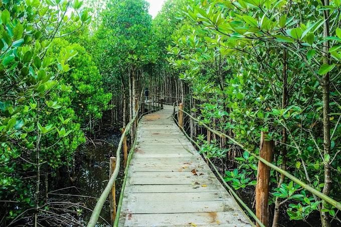 Hari Gerakan Sejuta Pohon Sedunia, Yuks Menanam Mangrove