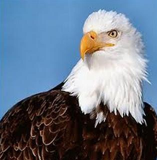 اسم يطلق على كل طير يصطاد ليأكل