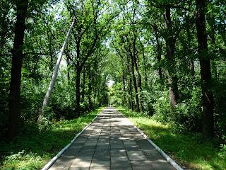 Графское. Великоанадольский лес. Дорога к лесному колледжу