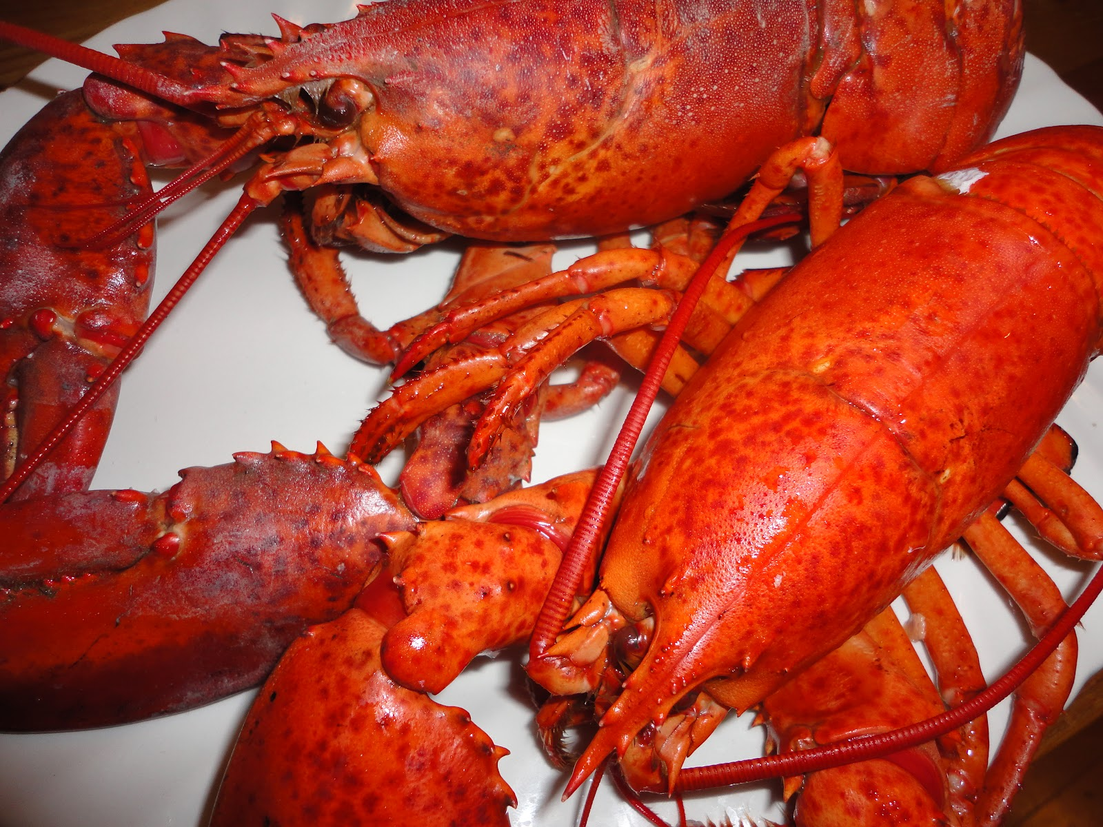 American Lobster Project