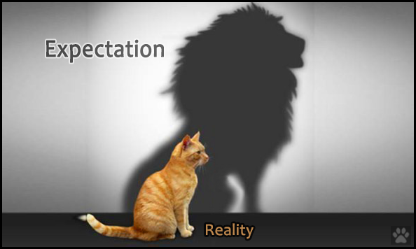 Photoshopped Cat picture • Expectation: ferocious Lion • Reality: cute ginger kitty