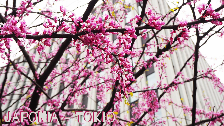 Jak zorganizować podróż do Japonii