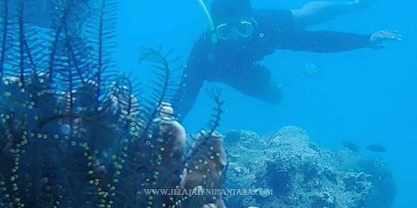 paket open trip wisata pulau harapan