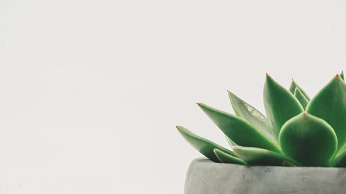 ¿Cómo crear un blog minimalista y por qué?
