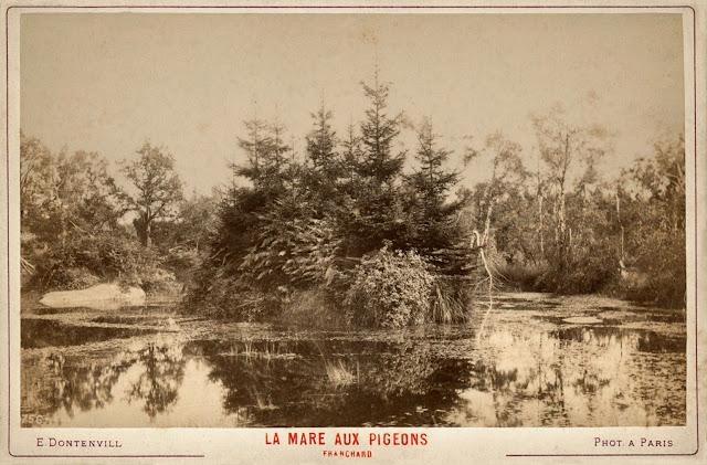La mare aux Pigeons, forêt de Fontainebleau, stage photo.