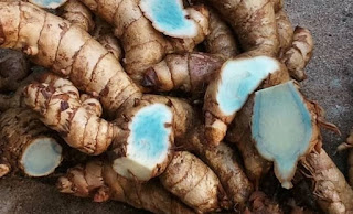 8 Benefits and Side Effects of Curcuma Aeruginosa for Reproductive Organ Fertility