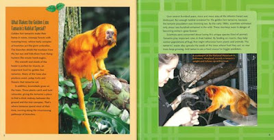 Great Monkey Rescue photography Sandra Markle nonfiction science