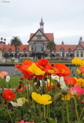 Flores en la ciudad de Rotorua (Nueva Zelanda)