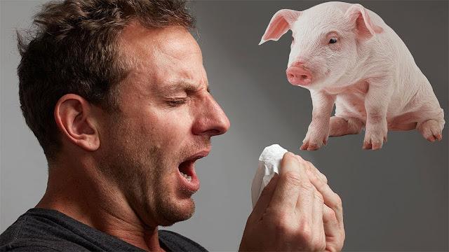 اعراض انفلونزا الخنزير واسباب الاصابة بانفلونزا الخنازير  وكيفية الوقاية منها