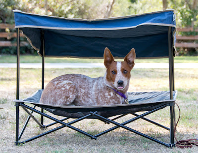 Folding mesh bed and canopy for dogs.
