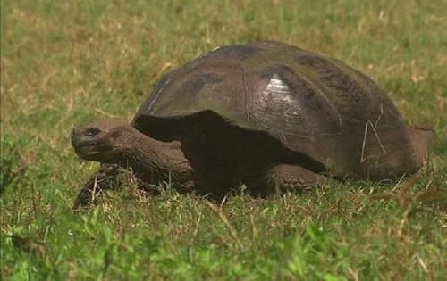 Top 14 loài động vật sống lâu nhất thế giới, thậm chí bất tử