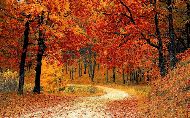 15 Nature Forest, Autumn, Fog, Foliage, Path, Trees Ultra HD Wallpapers 5K for Desktop