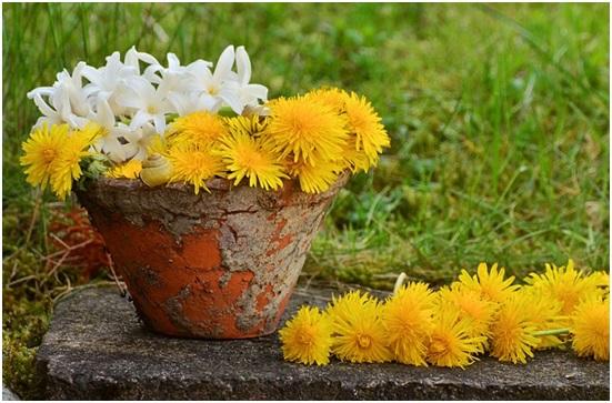 çiçeklerin bakımı