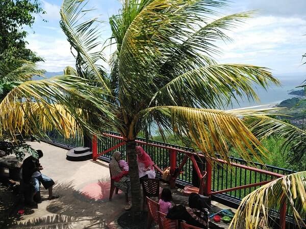 pohon kelapa muncak teropong laut