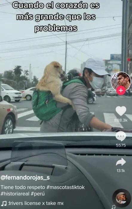 Joven sale a trabajar con su perrito en la espalda