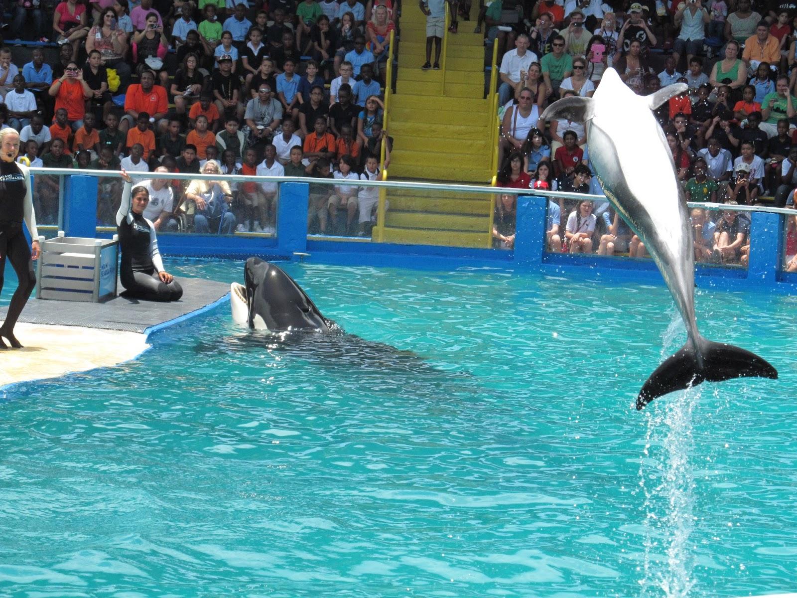 Killer Whale Show at Miami Seaquarium, FL - ouroutdoortravels.blogspot.com