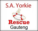 Yorkie Rescue in Gauteng