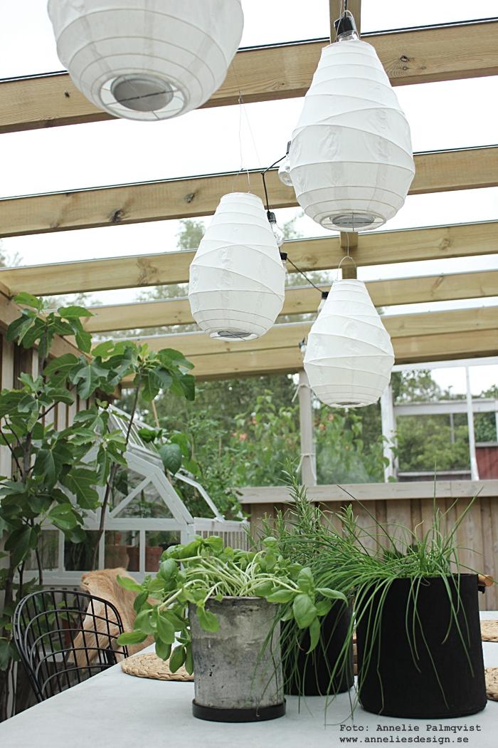lanterna, lanternor, rislampa, rislampor, Oohh krukor, kruka, utomhus, trädgård, betongbord, webbutik, webbutiker, webshop, inredning, färska kryddor, uteplats, uteplatser, altan, altanen, trädäck, trädäcket, fikus, träd, miniväxthus, växthus, dekoration, inspiration, dekorera, ljusslinga, ljusslingor,