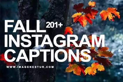 It's officially time to start celebrating the fall season. so we have the best Fall Instagram Captions 2021 & Best Instagram Quotes for Fall Pictures.