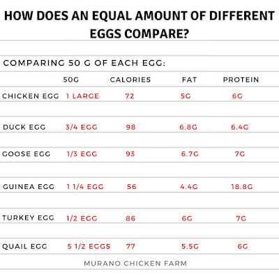 Comparing duck eggs to chicken eggs.