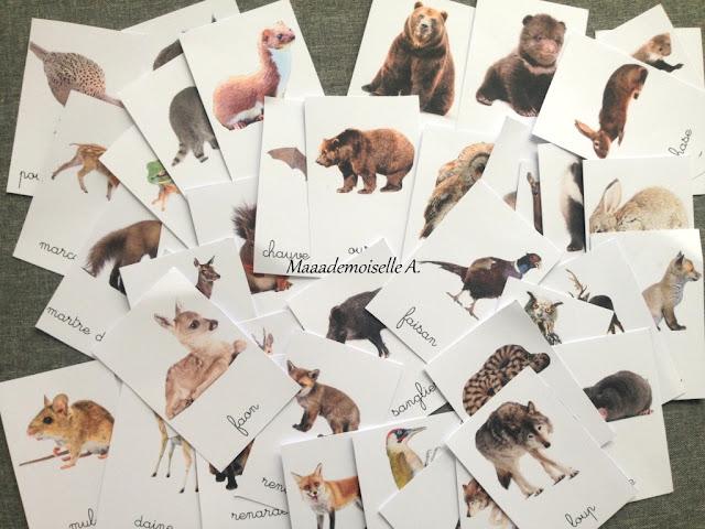|| Cartes de nomenclature ; Les animaux de la forêt