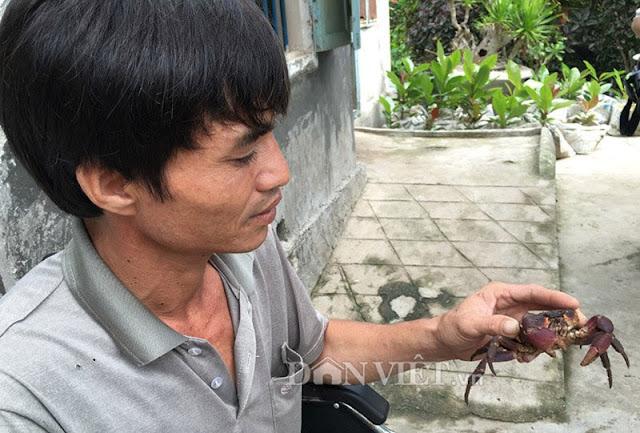 Anh Huệ, người duy nhất ở Quảng Ngãi nuôi đặc sản cua đá