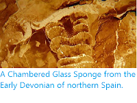 http://sciencythoughts.blogspot.com/2013/11/a-chambered-glass-sponge-from-early.html